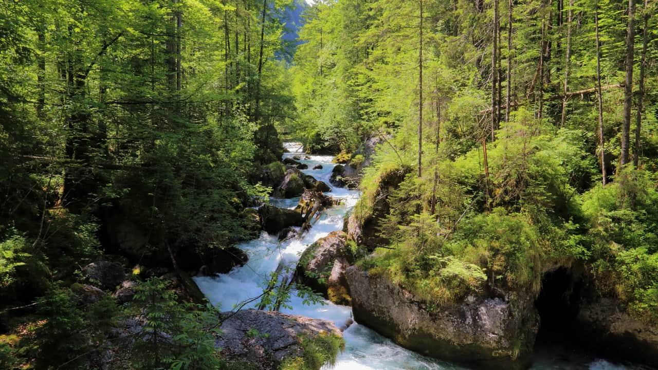 Waldbach i Echerntal - Hallstatt - Dachstein Semester i Österrike