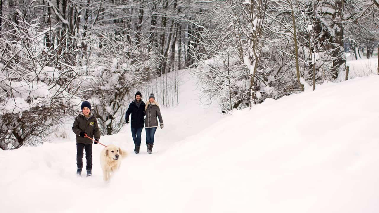 Vinterpromenad Skidresa Austria Travel