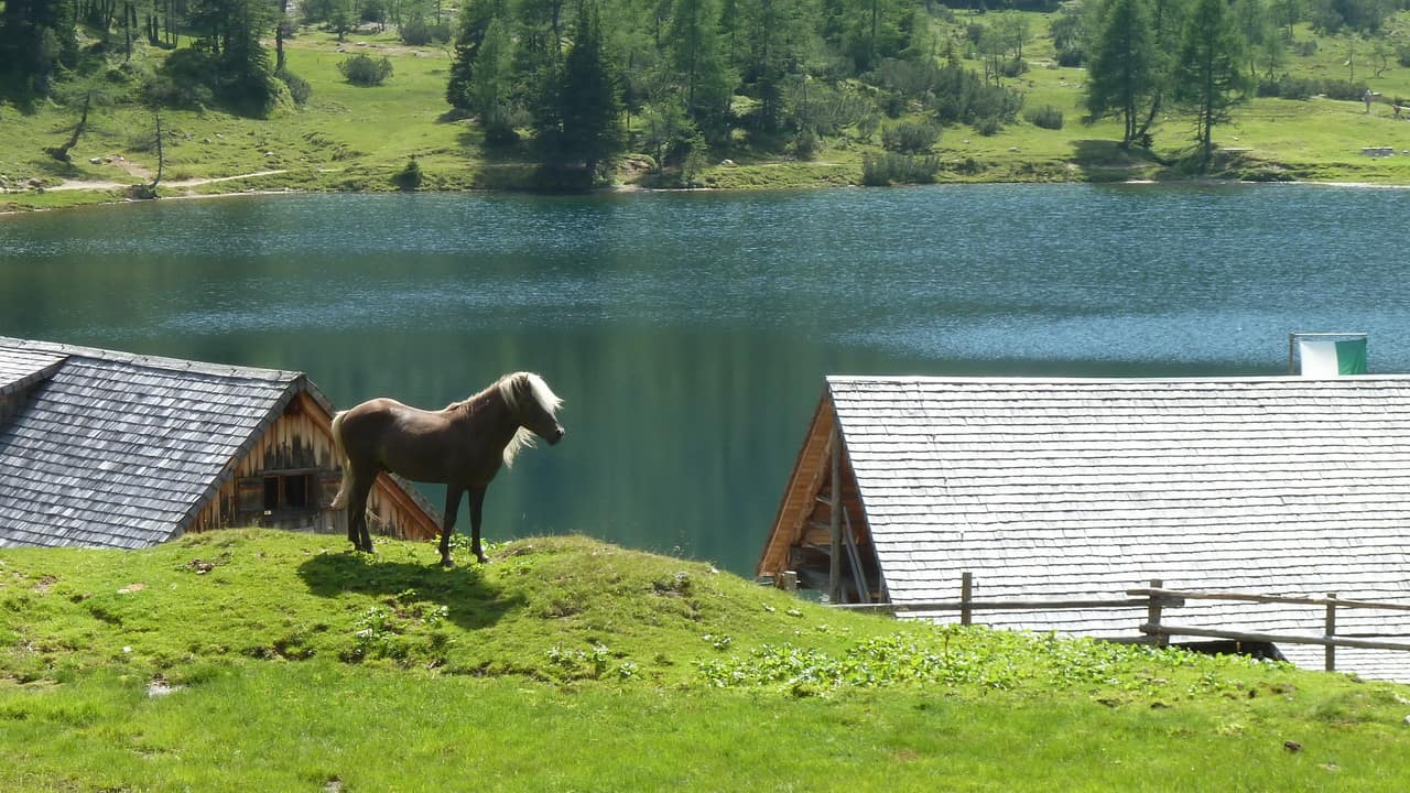 Stilig häst vid Duisitzkarhütte © Austria Travel - Rusner