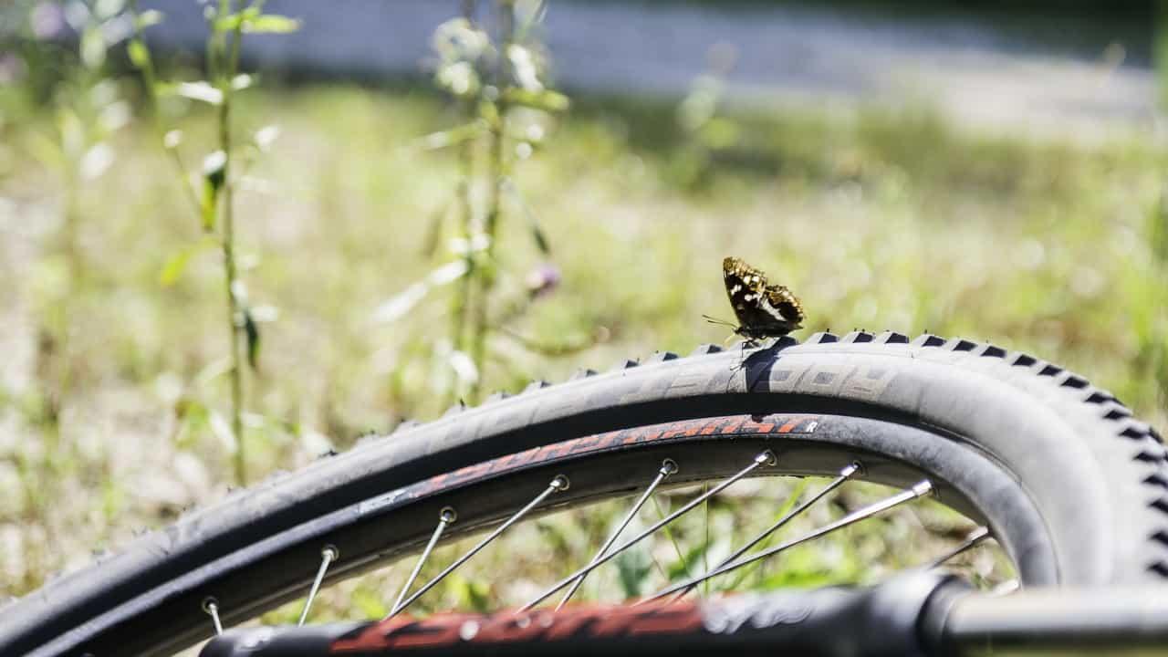 Fjäril på besök © Austria Travel - Thungren cykelsemester semester i Österrike