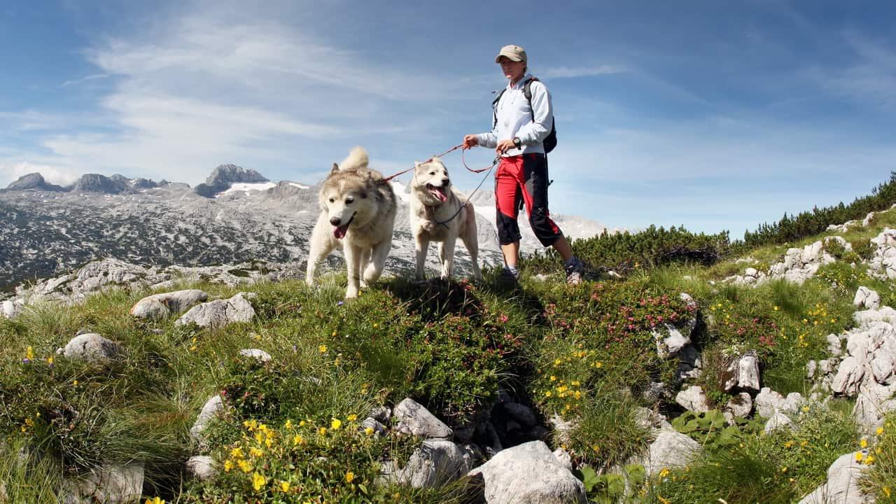 vandra med hund Österrike Alperna
