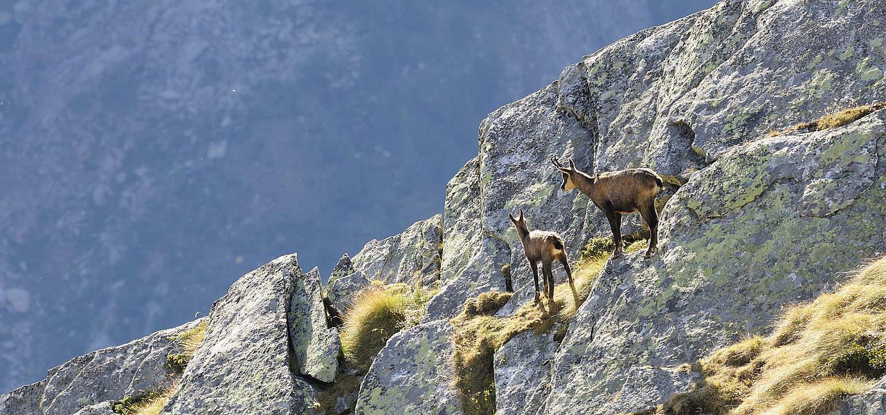 Stenget gems Nationalpark Hohe Tauern vandring