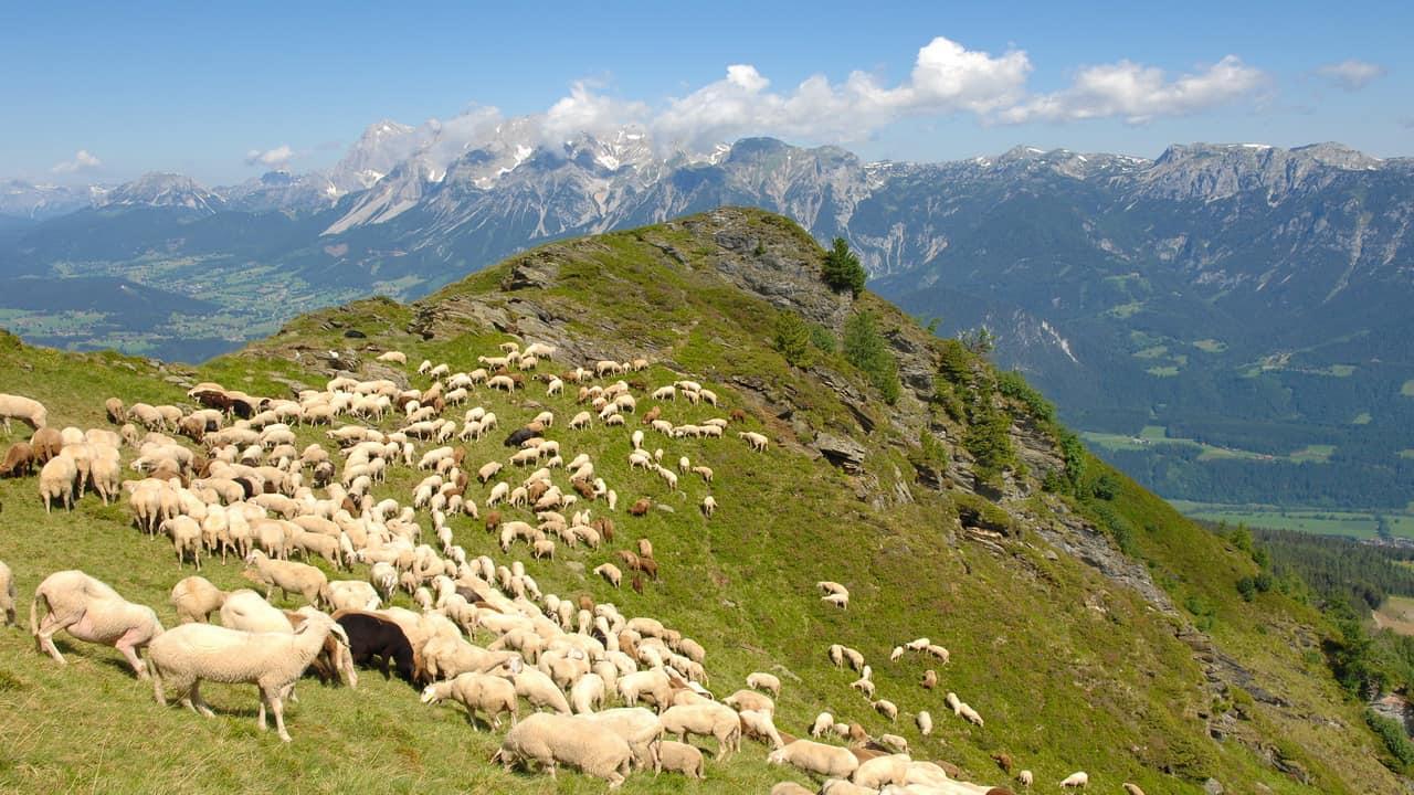 Hauser Kaibling Schladming Dachstein vandring semester i Österrike