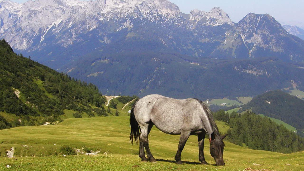 Vandring på egen hand runt Gosaukamm vid Dachstein © Austria Travel - Rusner