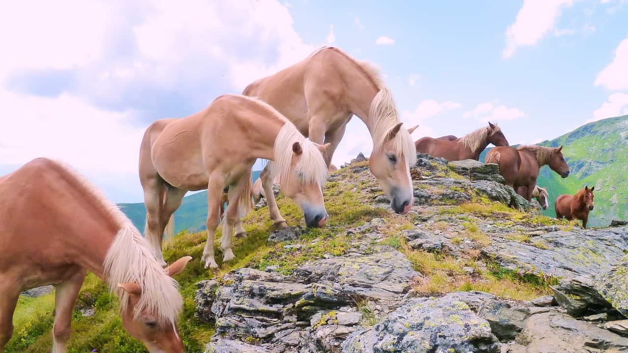 På gräsbergen hittar du fina hästar © Austria Travel - Rusner