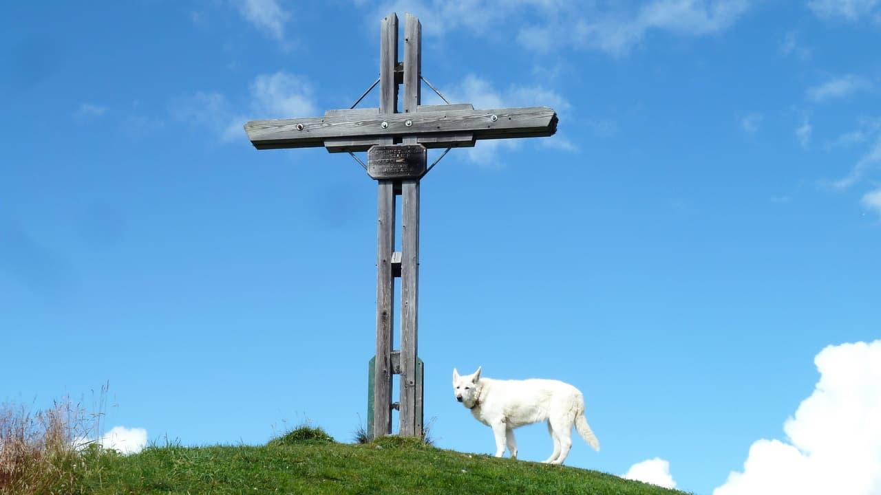Hund på vandring © Austria Travel - Rusner