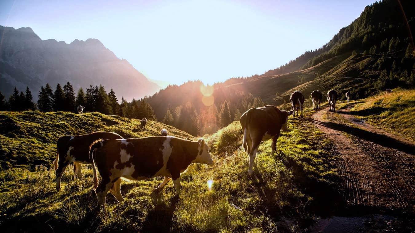 Soluppgångsvandring Saalbach Hinterglemm semester i Österrike