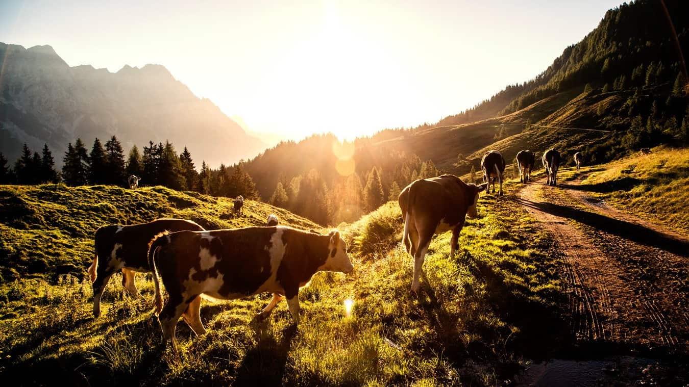 Soluppgång i Pinzgau Semster i Österrike