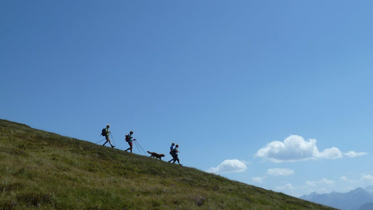 bra tid Vandring hund gräsbergen Pinzgau Zell am See