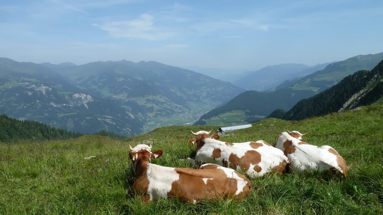 Kor vandring Zillerdalen © Austria Travel - Rusner