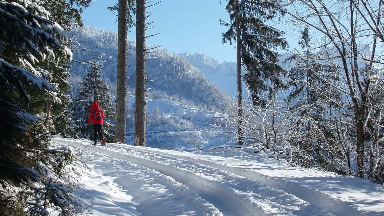 Vandra på snöskor-trailen i fina skogar - vintersemester i Österrike