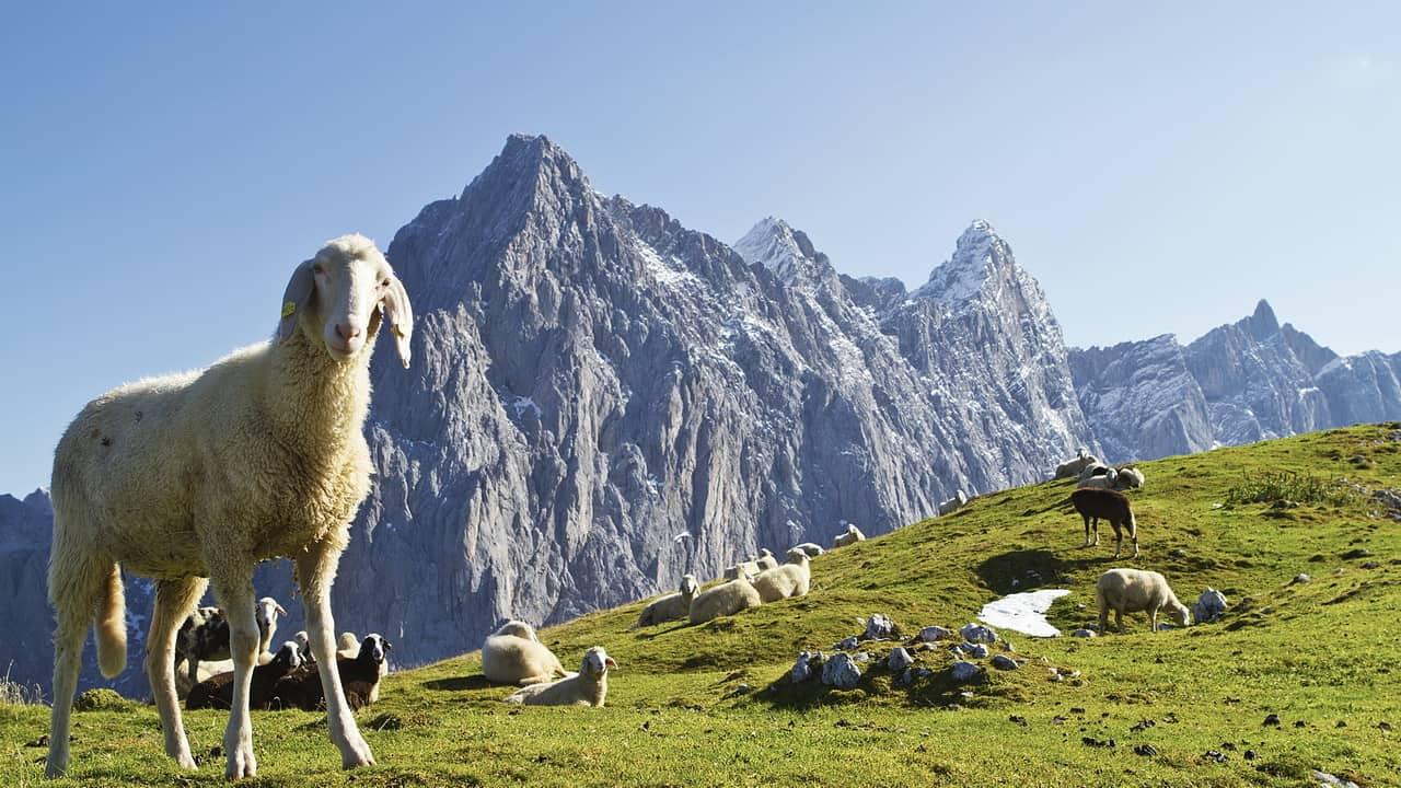 Vy på Dachstein vandring semester i Österrike