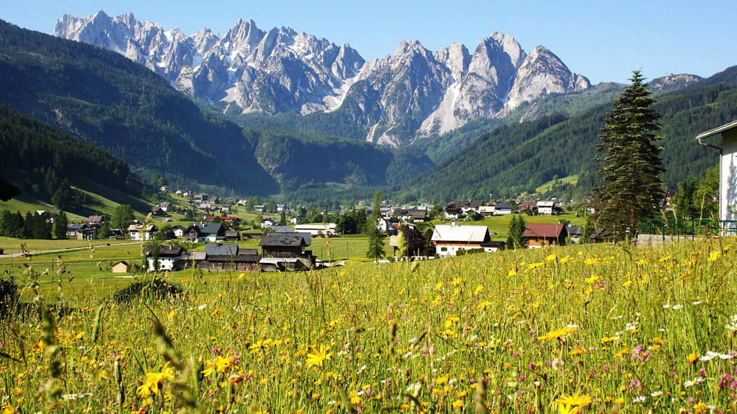 Semester i Gosau med Gosaukamm semester i Österrike