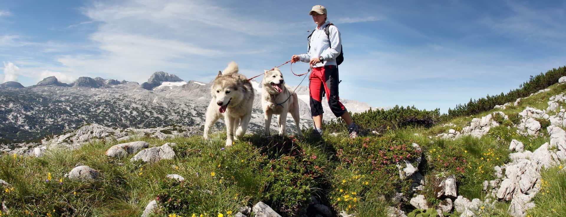Vandra på berget Krippenstein i Obertraun vandring semester i Österrike