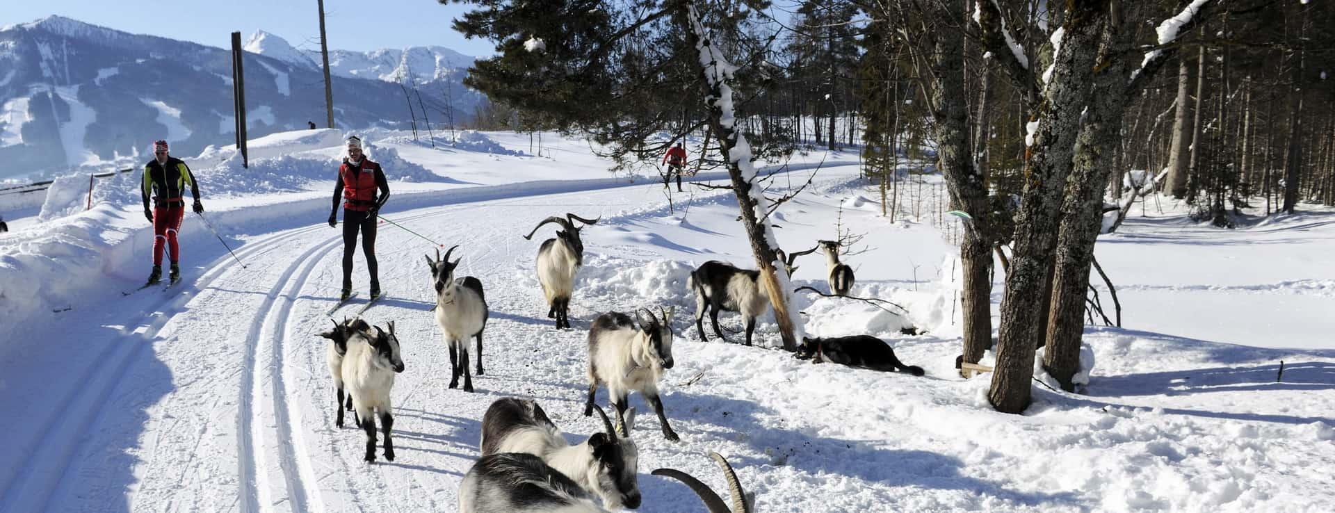 längdåkning skidsemester Österrike spår