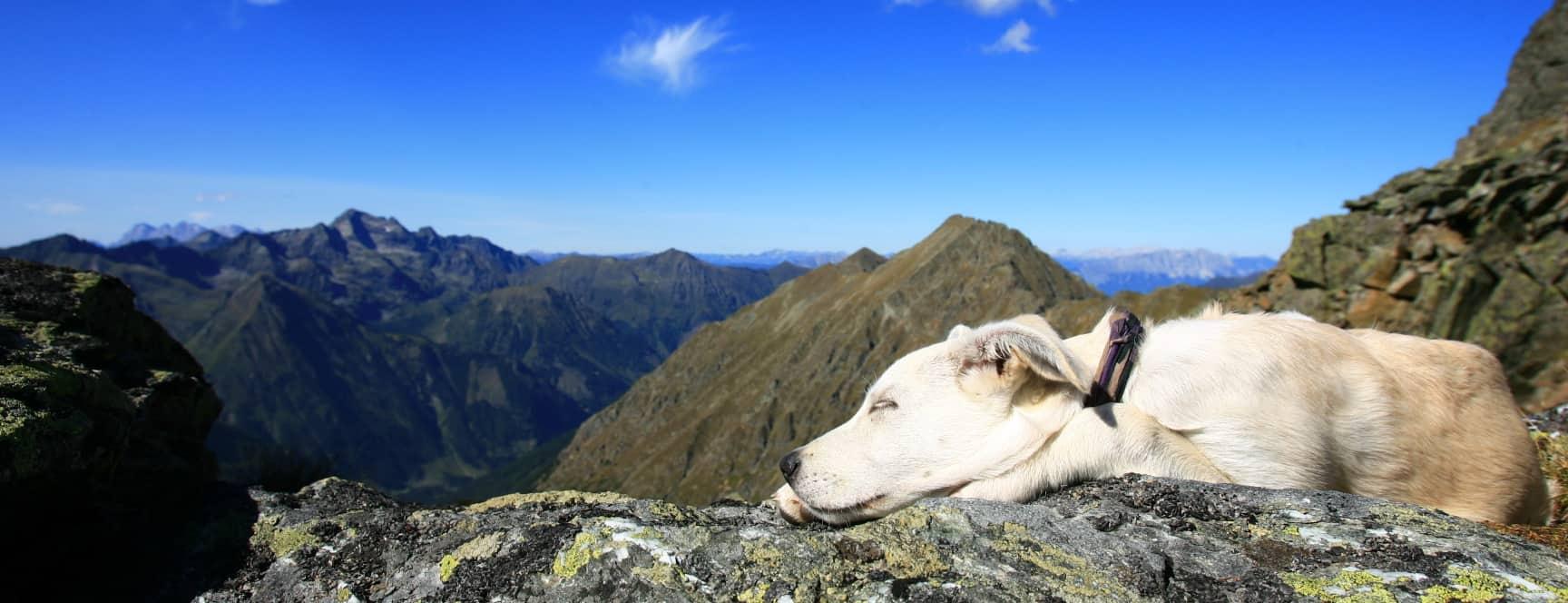 Prediktstuhl Semester i Österrike med hund