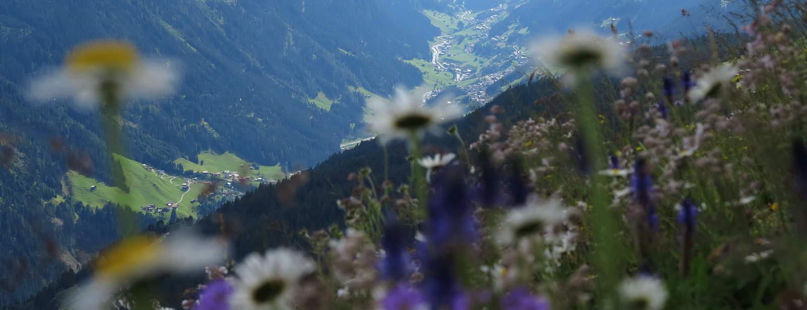 Äng med utsikt Semester i Österrike