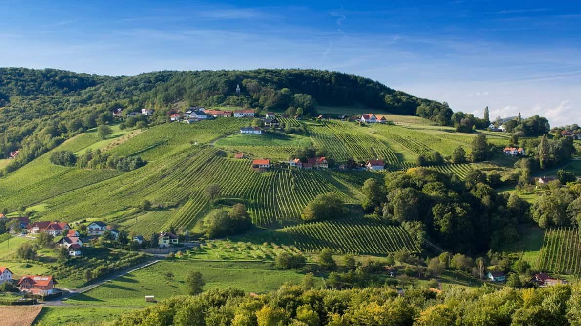 Vy på vinlandskapet vid St. Anna am Aigen Steiermark Cykla Cykling Semester i Österrike
