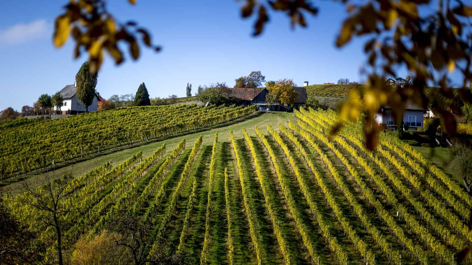 Vinlandskap i Klöch - Südoststeiermark - Semester i Österrike med Austria Travel
