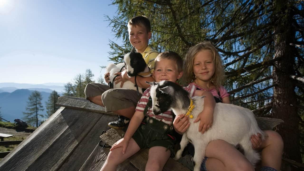 Barn med getter Lungau Österrike-Austria Travel