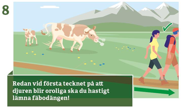 8. Undvik orolig boskap
