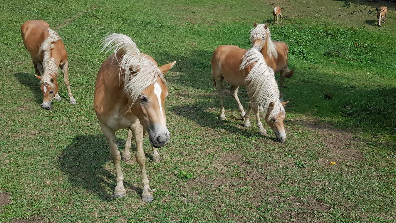 hästar naturpark vid ötscher