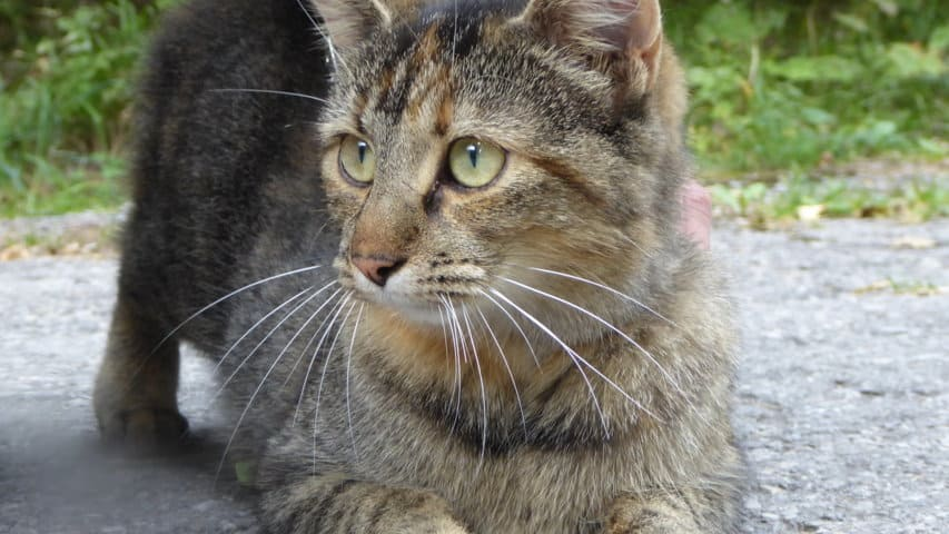 Katt Katze Lechweg