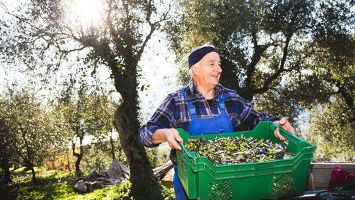 Olivskörd vandring Riva del Garda