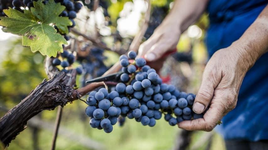 Vandring vingård Meran Gardasjön