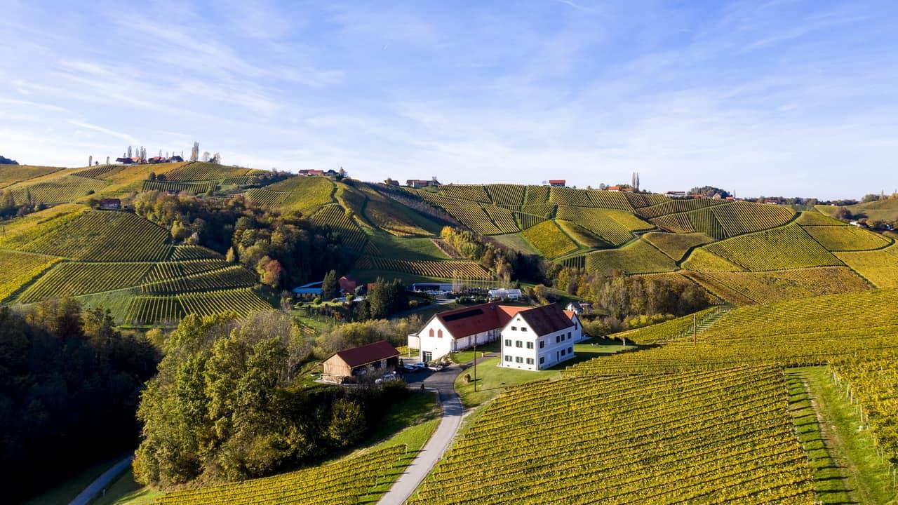 Cykling vinparadis Sernauberg Südsteirische Weinstrasse